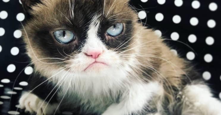 Grumpy Cat – Tardar Sauce – Dies At The Age Of Seven!