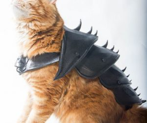 JWall Made 3D Armor For His Orange Tabby Cat Named Bobo