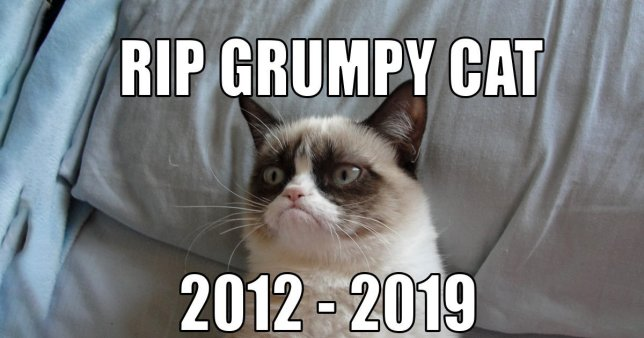 Grumpy Cat – Tardar Sauce – Dies At The Age Of Seven!