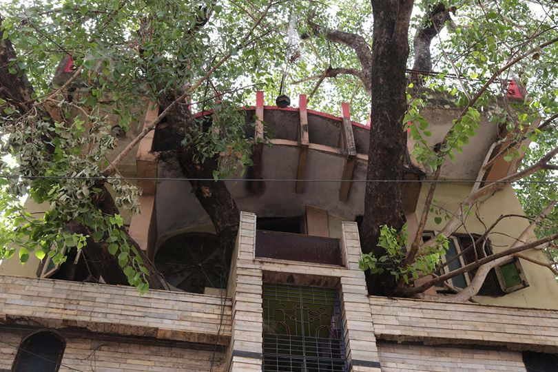 Kesharwani Family Built Their Home Around A 150-Year Old Fig Tree