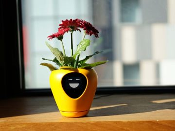 Lua Shows Animated Faces To Help You Care For Your House Plant