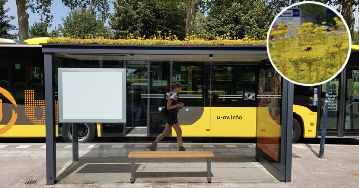 Bus Stops Have Been Covered With Plants In Utrecht As A Gift To Honeybee