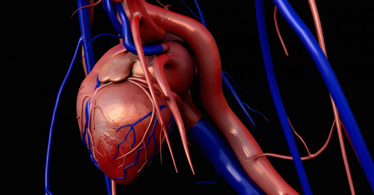 FRESH Collagen-Based 3D Printing Technique Can Fix Your Heart