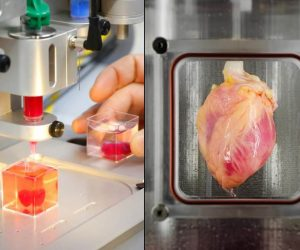 Stem Cells Were Used For Growing & 3D Printing Functional Hearts