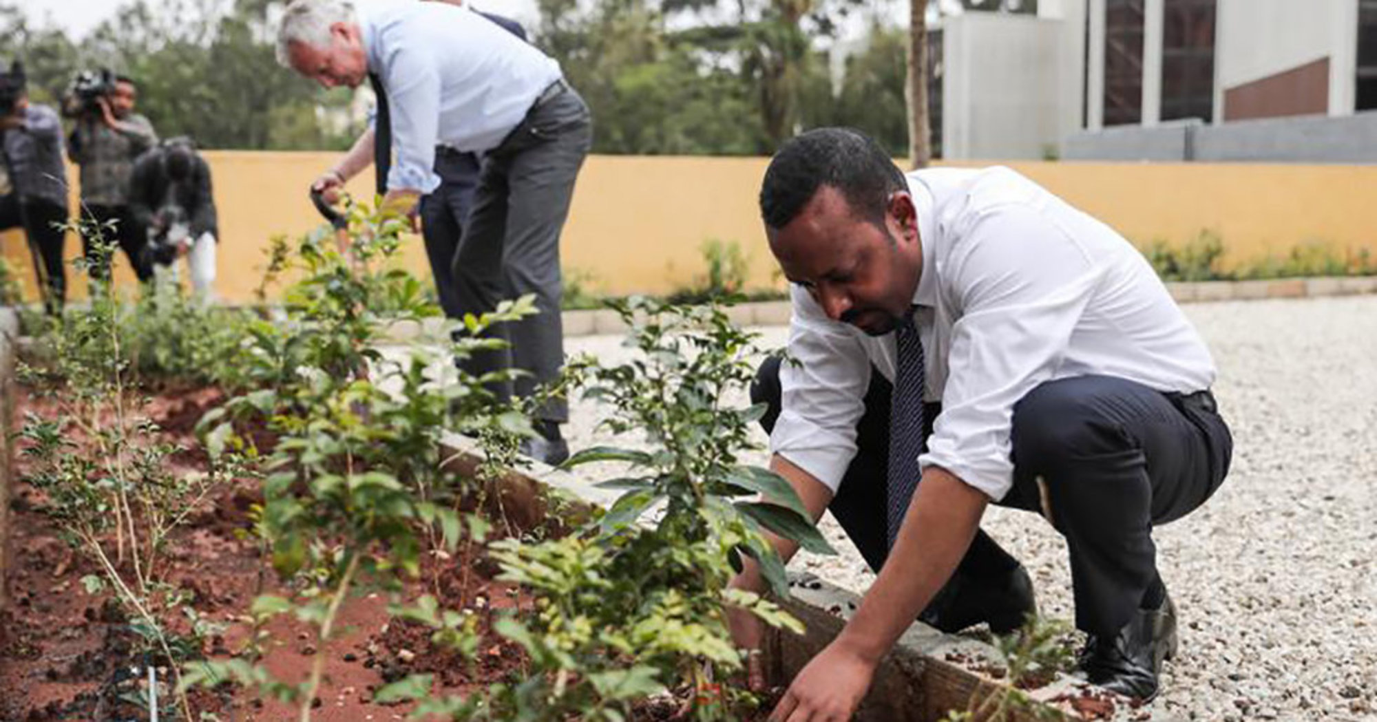 Green Legacy Initiative In Ethiopia Plants 350 Million Trees In 12 Hours