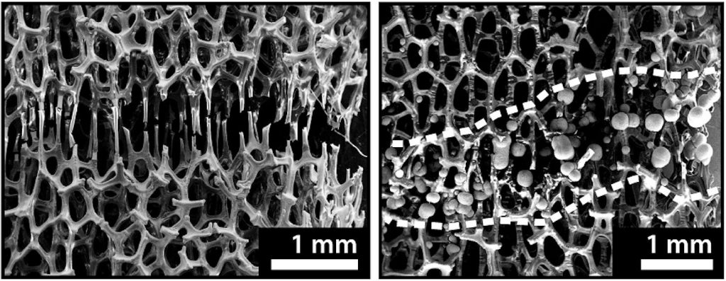 Researchers Have Healed Metal At Room-Temperature Similar To Bones
