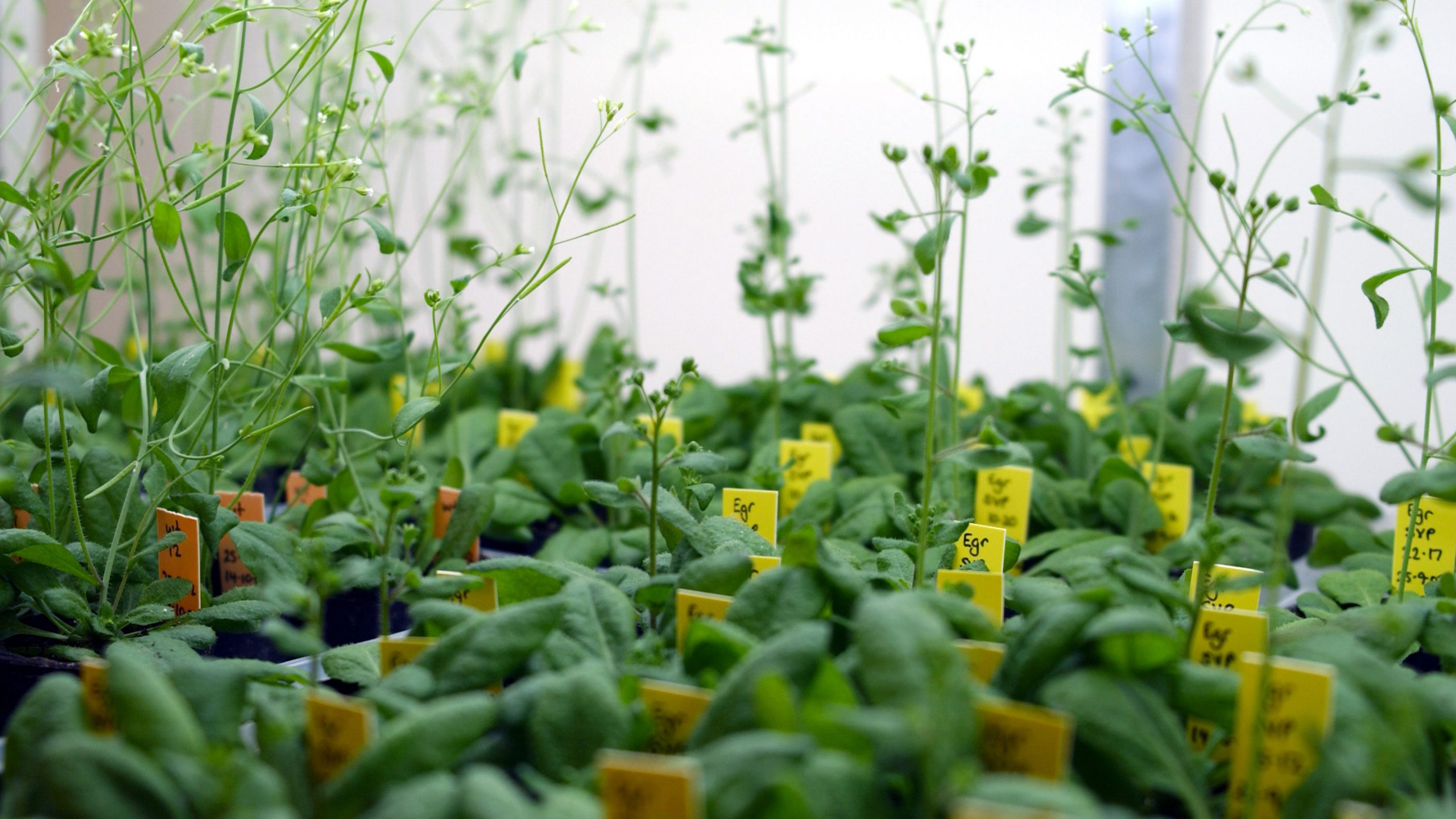 This New Toolset Can Allow Scientists To Genetically Modify Plants Easily