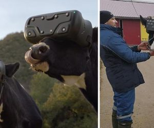 Russian Cows Are Using VR Headsets To Get Rid Of Anxiety