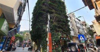 Dr. Hoang Nhu Tang Used 2 Creeper Plants To Transform This Building