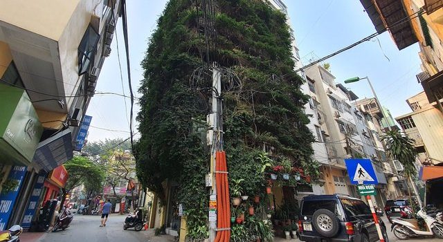 Dr. Hoang Nhu Tang Used 2 Creeper Plants To Transform This Building