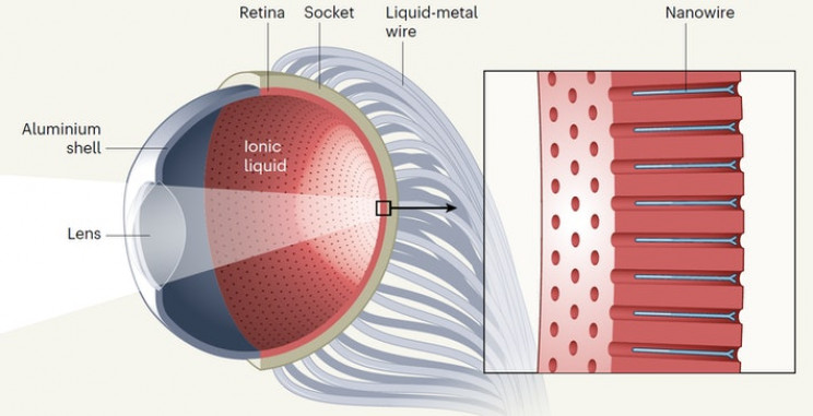The ElectroChemical Eye Can Perform Better Than Human Eye