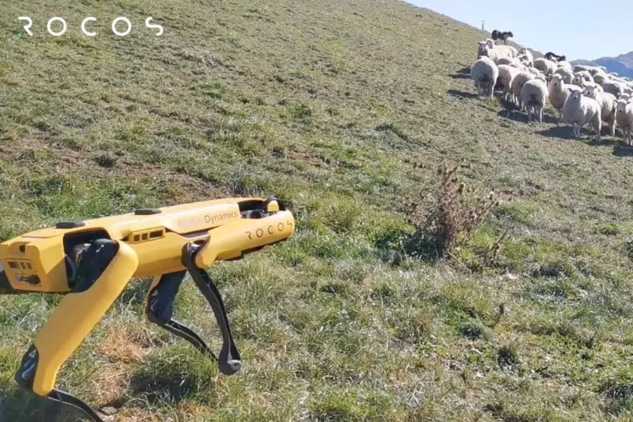 Rocos Talks About A Robot Sheepdog – A Shepherd Disagrees!