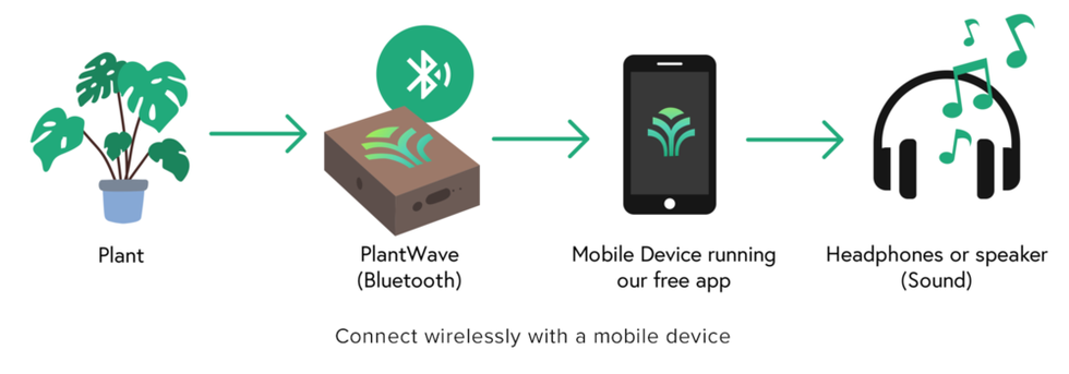 Making Music With Plants Is Possible Thanks To PlantWave
